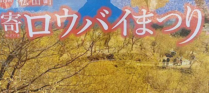 松田町寄(やどりき)のロウバイ祭