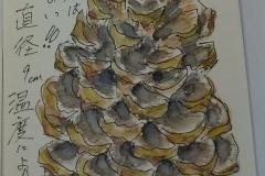 松の種類は知らない 身長15cm 直径9cm-温度により伸び縮み