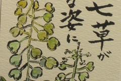 春の七草が・・・