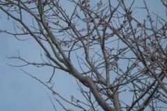 よく見るとちらほら咲き始めている。