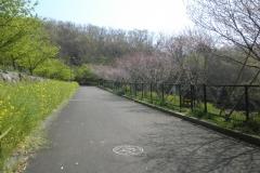 運動公園に向かう坂道通りです。