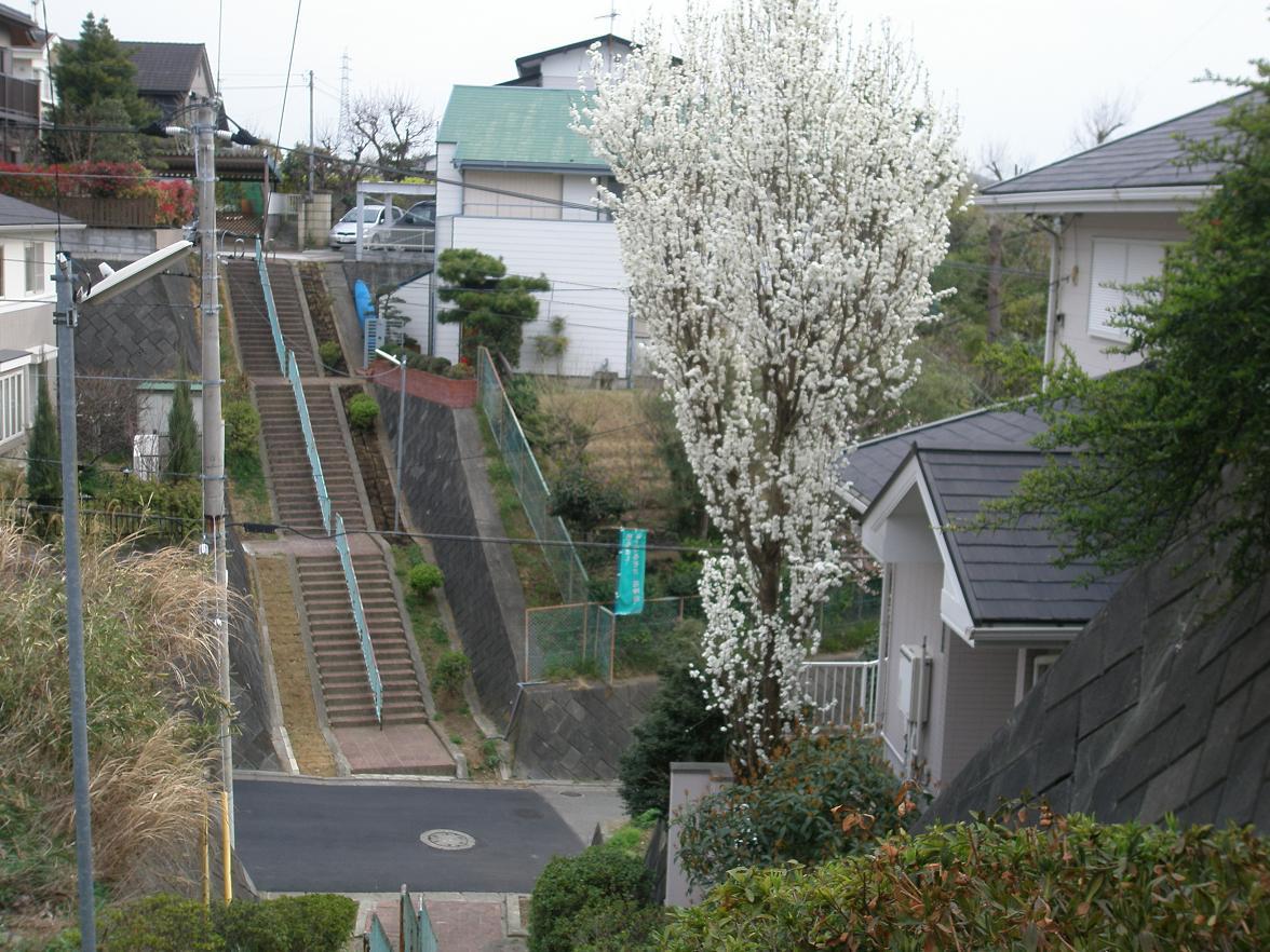 花桃の階段