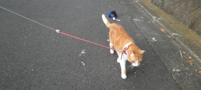 ネコの散歩