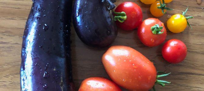 夏野菜 初収穫♪
