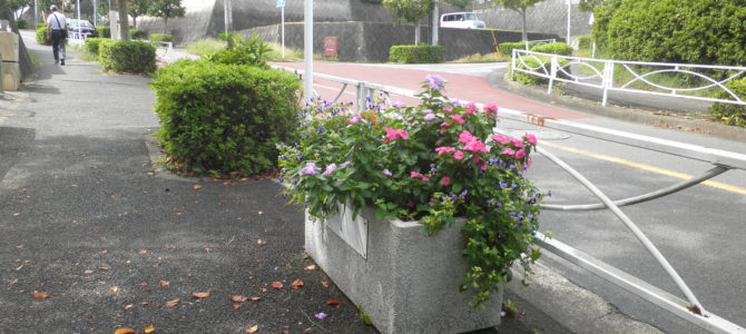 石神台入口の花のポット