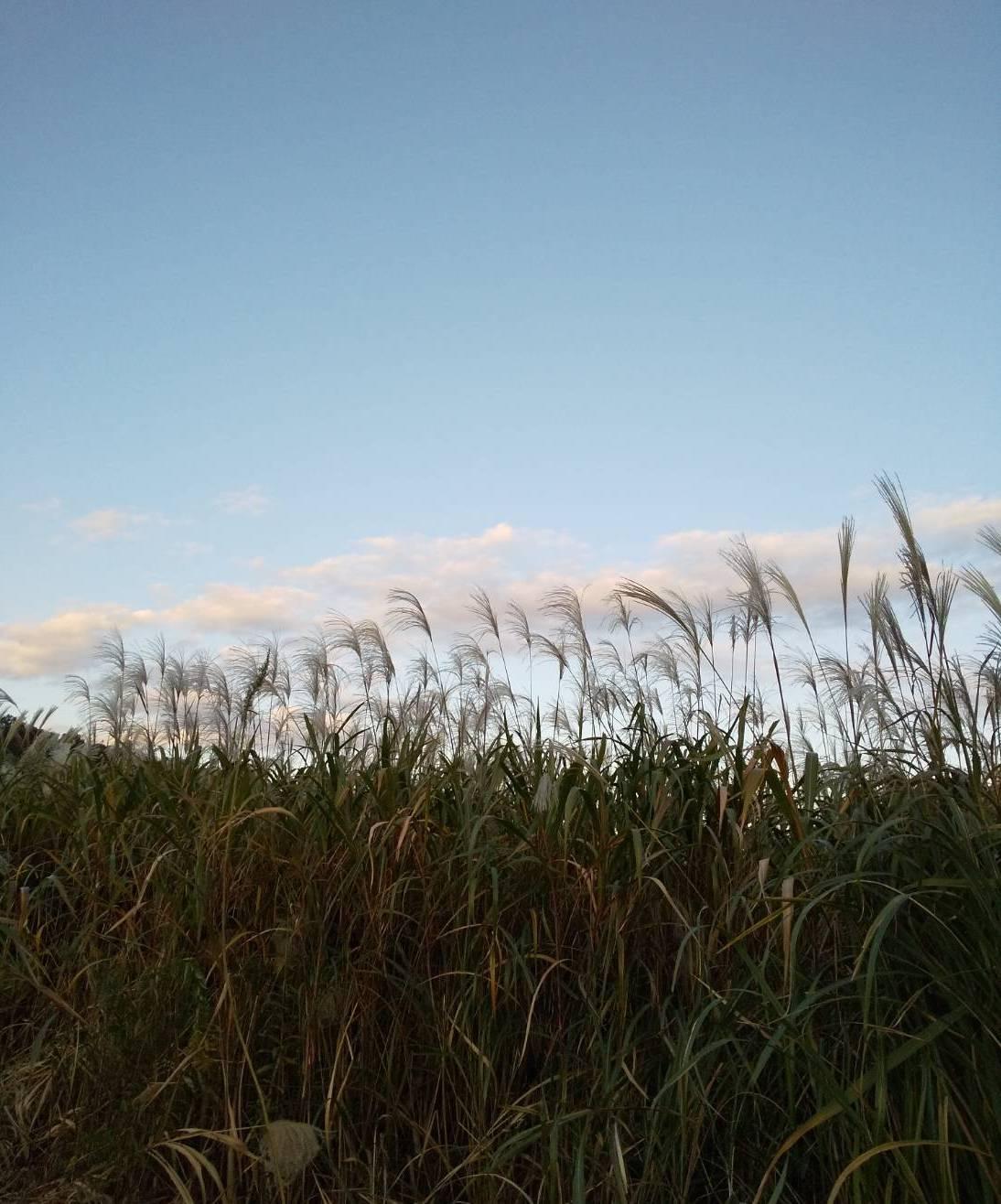 秋の空あれこれ