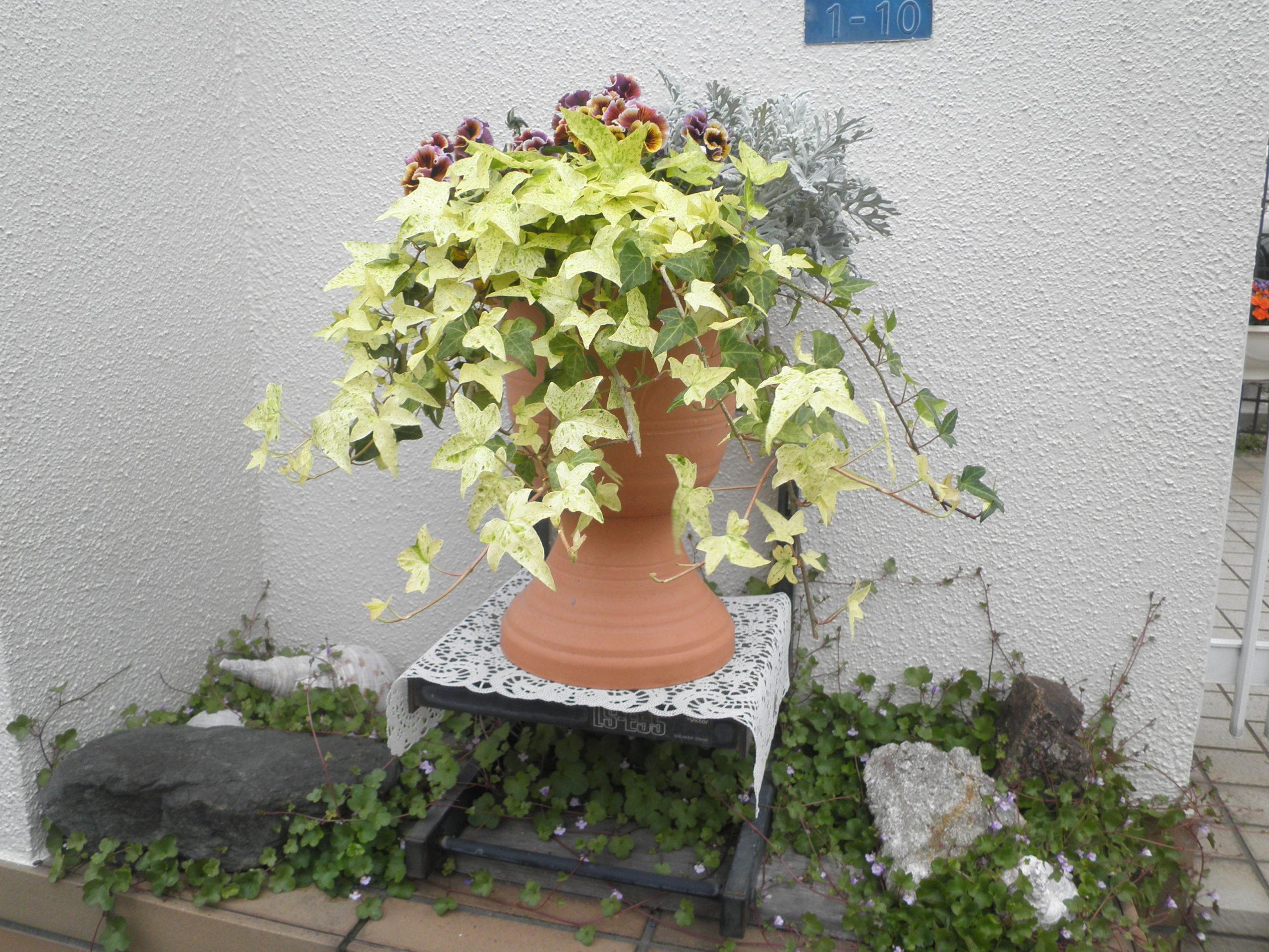 広橋邸の花
